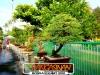 bonsai-exhibit-2012-1