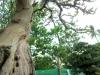 bonsai-exhibit-2012-10