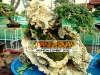 bonsai-exhibit-2012-11