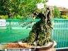 bonsai-exhibit-2012-15