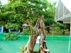 bonsai-exhibit-2012-16