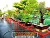 bonsai-exhibit-2012-2