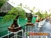bonsai-exhibit-2012-3