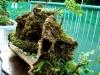 bonsai-exhibit-2012-6