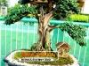 bonsai-exhibit-2012-8