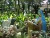 our-lady-of-manaoag-3
