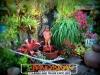 plants-and-garden-landscape-competition-12