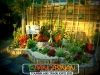 plants-and-garden-landscape-competition-5