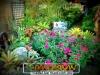 plants-and-garden-landscape-competition-6