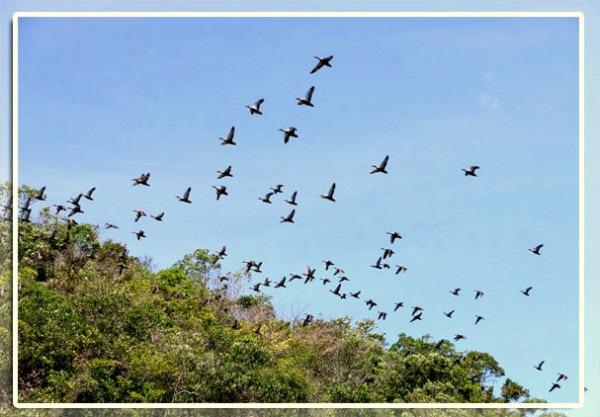 Hundred-Islands-Birds