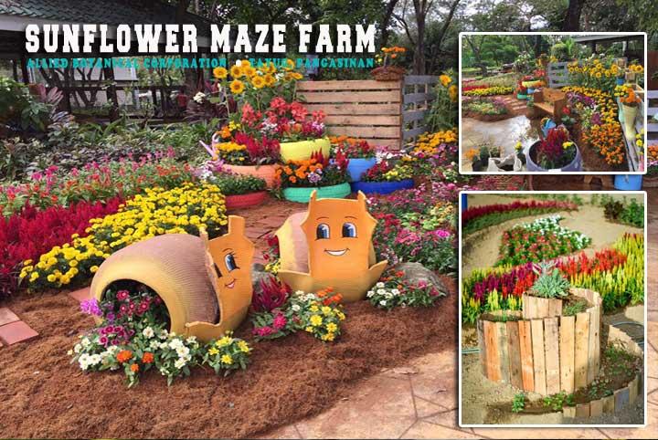 Sunflower Maze Farm in Tayug an Agritourism Destination